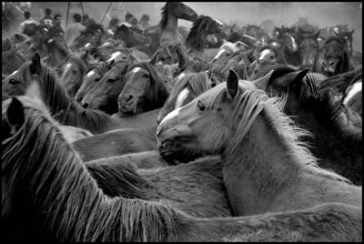 cabalos_teniente
